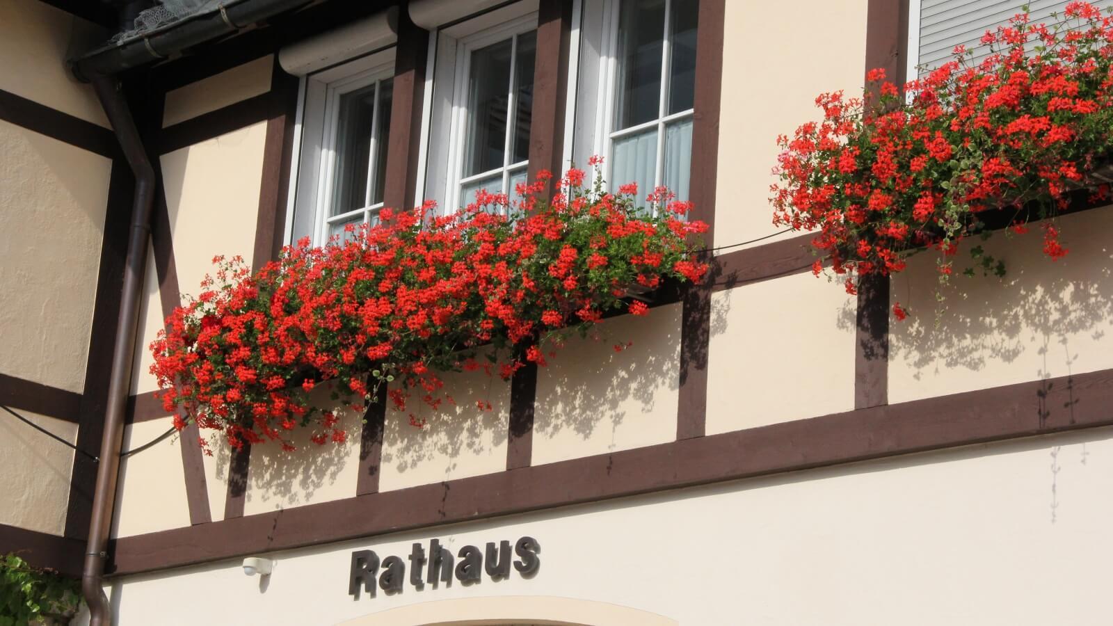 Bild von Blumen am Rathaus