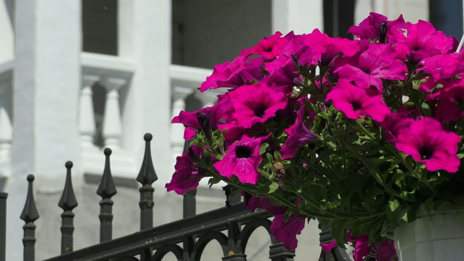 Bild von Zaun mit Blumen geschmückt