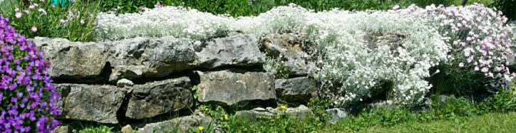 Steinmauer mit Blumen bewachsen