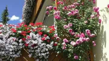 Bild von Balkon mit Blumenschmuck
